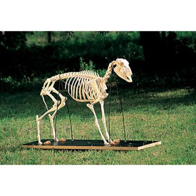 esqueletodeunaovejaovisaries