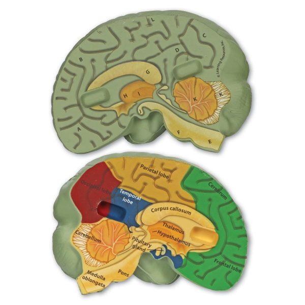 1903 crssec brain 3 sh 1