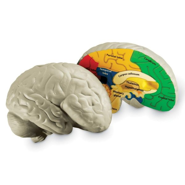 1903 crssec brain sh 2 06 1