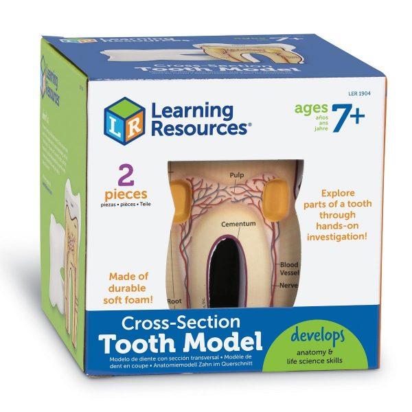 1904 cross section tooth box nbr rt sh 1