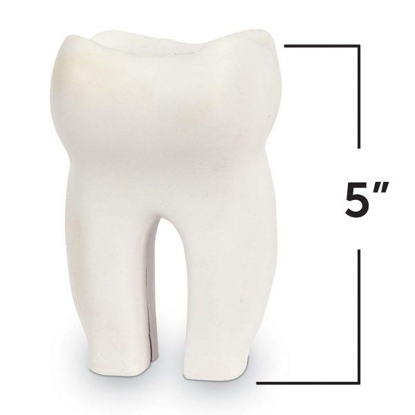 1904 toothcrssec 3 sh hr 1