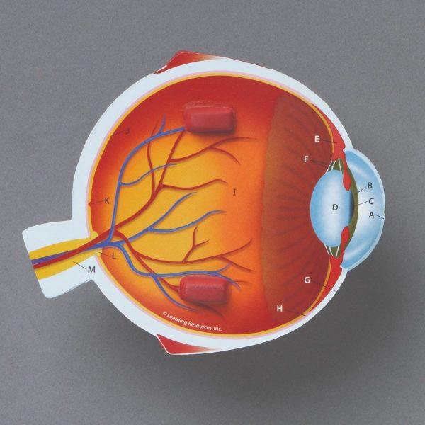 1907 eye model 21